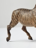 Zebra Vienna Bronze