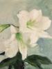 Petrus Theodorus (Piet) van Wijngaerdt, 'Roode en Witte Amaryllis', oil on canvas, ca. 1925 - Petrus Theodorus (Piet) van Wijngaerdt