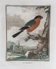 L'histoire naturelle des oiseaux: 20 engravings depicting birds