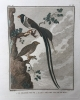L'histoire naturelle des oiseaux: 20 gravures van vogels