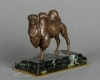 An unusual French camel bronze circa 1860