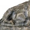 Lambertus Zijl, Bronze Sculpture of a Sitting Ox, 1916 - Lambertus Zijl