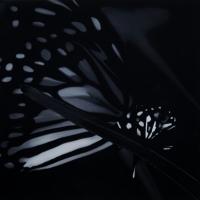 Butterfly 4 - - Liu Xiaofeng