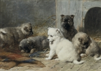 Lovely young puppies