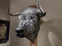 Head of a bull