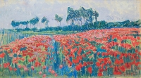 Field of Poppy's