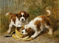 Two Saint-Bernard puppies playing with a hat - Otto Eerelman