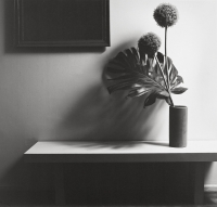 Flower - Robert Mapplethorpe