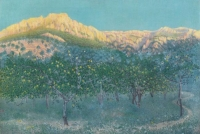 Citronniers à Marjorque