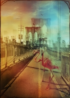 ZooCity Flamingos - Andre Sanchez