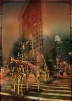 ZooCity Giraffes