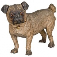 A beautiful Vienna cold painted bronze of a pug dog, circa 1890