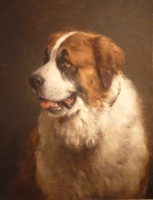 Portrait of a Saint Bernard dog