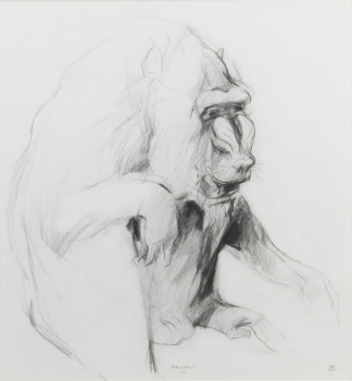Pieter Borstlap, Sketch of a Mandrill, charcoal on paper - Pieter Borstlap