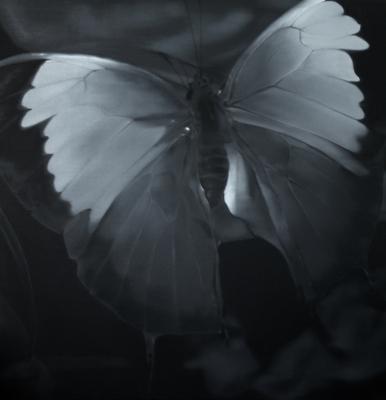 Butterfly 2 - - Liu Xiaofeng