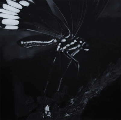 Butterfly 5 - - Liu Xiaofeng