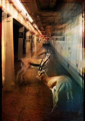 ZooCity Gazelles